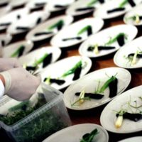 firmaarrangement-catering